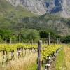 Boekenhoutskloof-Vineyards-4-min.jpg